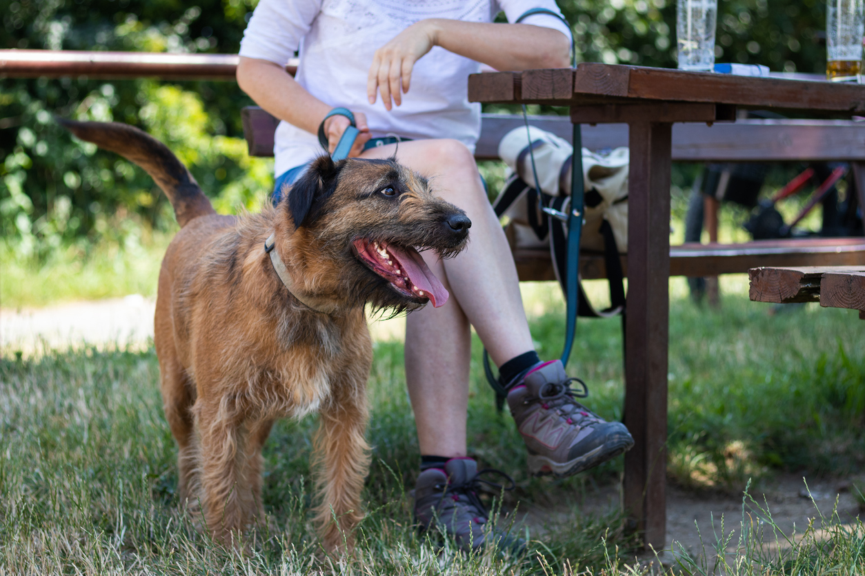 dog friendly pubs in filey